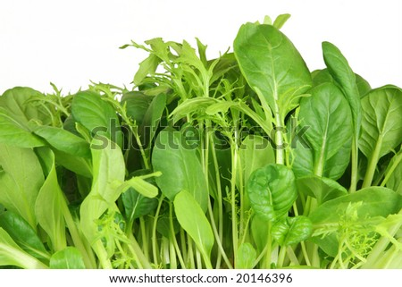 Salad leaf selection of pak choi, tatsoi and chard, over white background. - stock photo