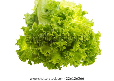 Salad lettuce leaves isolated in white - stock photo