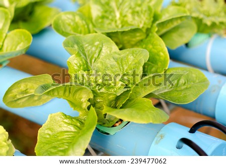 Salad planting by hydroponic technology - stock photo