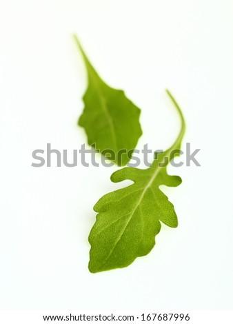 Salad Rocket Rucola Eruca Sativa