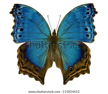 Salamis temora, a blue african butterfly isolated on white background - stock photo