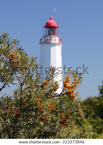Sallow thorn berries in front of the Lighthouse near Kloster (Island Hiddensee Germany) - stock photo