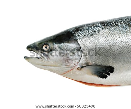 Salmon fish close up isolated on white