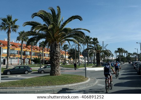 Salobrenya. Andalusia. Spain. December 20, 2015 - The road between the rows of of palm trees in December 20, 2016 in Salobrenya. Andalusia. Spain.