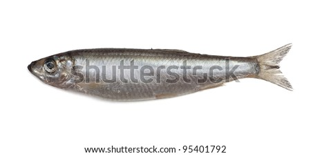 Salted sprat fish isolated on white background
