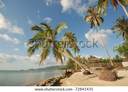 samui beach view nice landscape seascape view