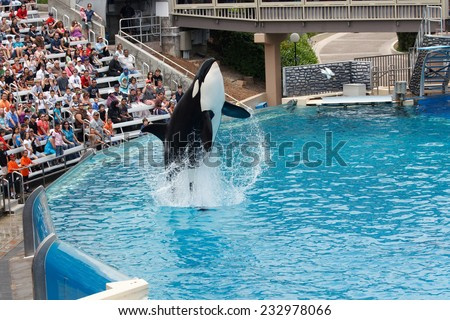 SAN DIEGO, CALIFORNIA, USA - JUNE 3, 2009: Killer Whale performing at Sea World, San Diego - stock photo