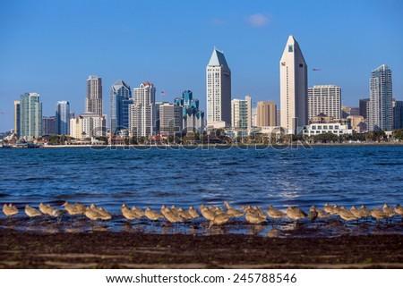 San Diego skyline with birds, CA - stock photo