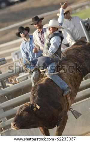 SAN DIMAS, CA - OCTOBER 2: Cowboy Zeb Lanham competes in the Bull Riding event at the San Dimas Rodeo in San Dimas on October 2, 2010 in San Dimas. - stock photo