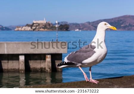 San Francisco Pier 39 Seagull and Alcatraz Island - stock photo