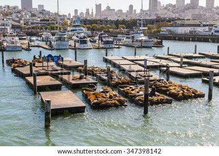 SAN FRANCISCO, USA - OCT 5, 2015: Seal (sea Lions) at the Pier 39 of San Francisco. Pier 39 is a shopping center and popular tourist attraction built on a pier in San Francisco, California - stock photo