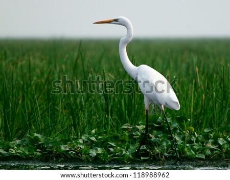 Sanctuary Birds - stock photo