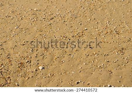 Sand and cockleshells - stock photo