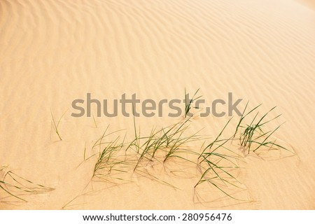 sand and sea grass, nature background - stock photo