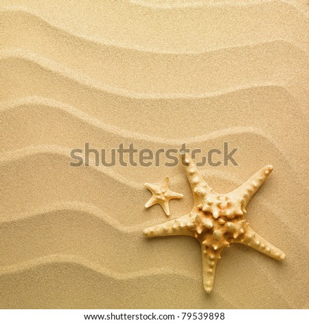 sand as background and starfish - stock photo