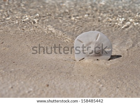 Sand dollar propped up in sand with ocean water waves in background.  copy space available - stock photo