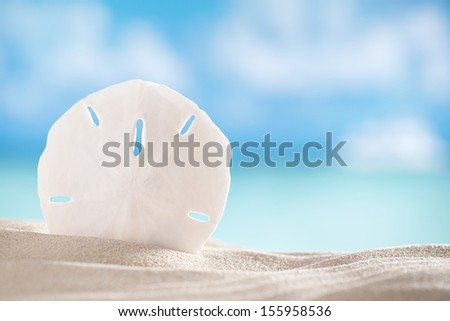 sand dollar shell on beach and sea and boat background, shallow dof - stock photo