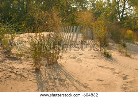 Sand Dune and Seagrass