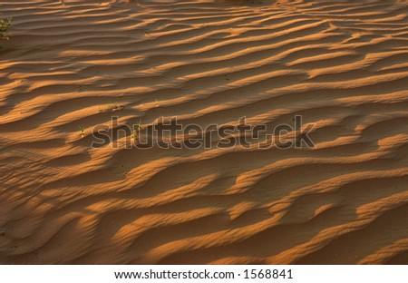 Sand dune in the Negev, Israel. - stock photo
