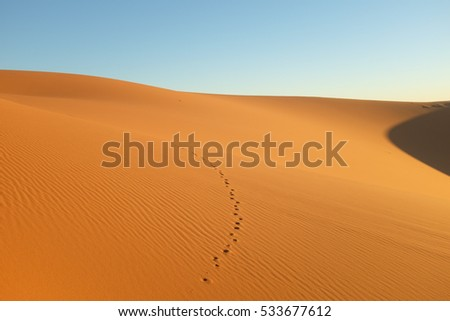 Sand Dune with Animal Tracks in the Morning