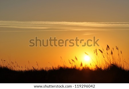 Sand dunes and sea oats silhouette in a morning sunrise - stock photo