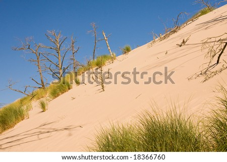 sand dunes eating up forest - stock photo