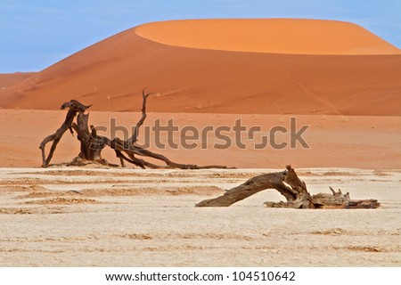 Sand dunes of Namibia with trees - stock photo