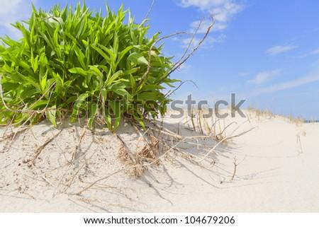 Sand dunes on the beach - stock photo