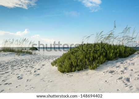 Sand dunes, sea oats and beach rosemary on a pristine Florida beach. - stock photo