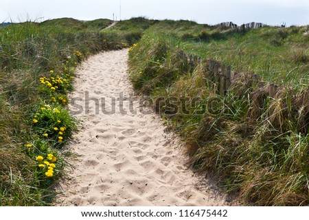 Sand footpath through dunes at the beach in Netherlands