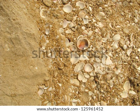 Sand, sea shells and stone background from Mediterranean sea - stock photo