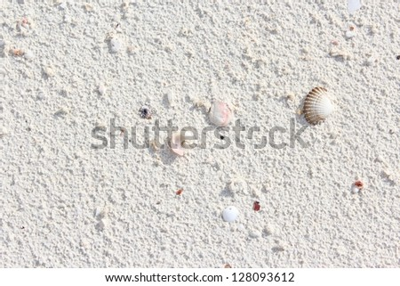 sand with shells on the sea beach - stock photo
