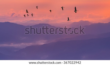 Sandhill Cranes in Flight at Sunrise Panoramic View - stock photo