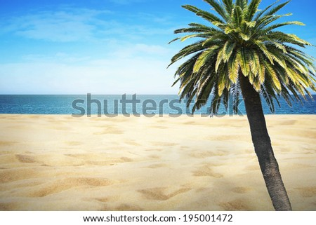 Sandy beach on sunny summer day with palm - stock photo