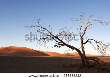 Sandy dune and dried dead trees in a Namibian desert, Namib Naukluft national park, Namibia - stock photo