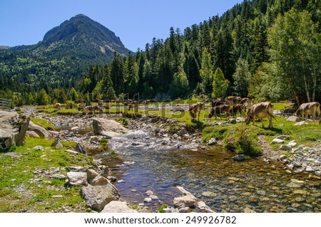 Sant Nicolau is a river in Aiguestortes National Park - stock photo