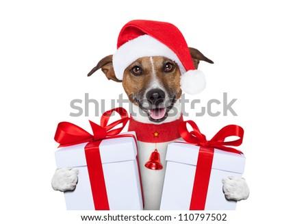 santa christmas dog with gifts - stock photo