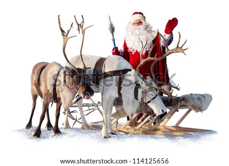 Santa Claus are near his reindeers in harness on the white background. - stock photo