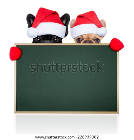 santa claus christmas couple of two dogs hiding behind an empty blank big  green blackboard, isolated on white background - stock photo
