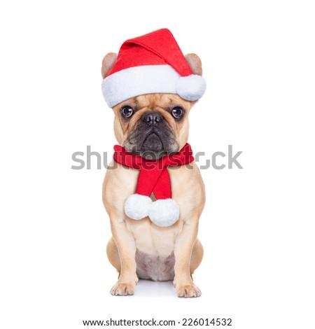 santa claus christmas dog  isolated on white background - stock photo