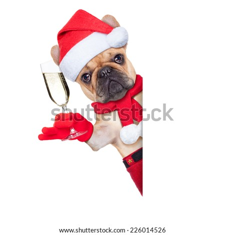 santa claus christmas dog toasting cheers with champagne glass besides white blank placard or banner, isolated on white background - stock photo