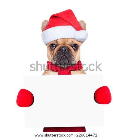 Santa claus christmas dog wearing a hat holding a blackboard or placard , isolated on white background - stock photo