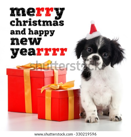 Santa Claus - dog - stock photo
