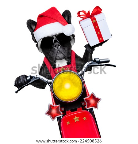 santa claus dog on motorbike bringing presents or gifts to everyone,  isolated on white blank white background  - stock photo