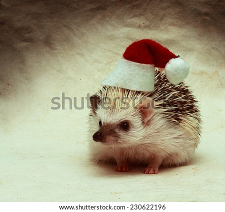 santa claus hedgehog christmas background - stock photo