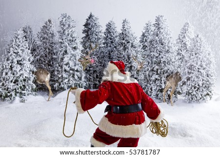 Santa Claus holding a rope approaching reindeer in grove of snow covered pine trees while it is snowing, trying to wrangle the deer