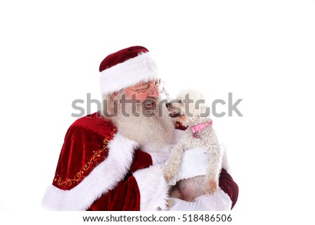 Santa Claus isolated on a white background asking small bichon dog what he wants for Christmas