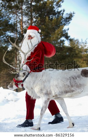 Santa Claus walking with his reindeer in the wood - stock photo
