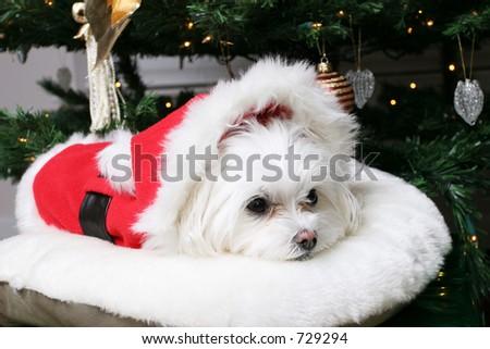 Santa Puppy - stock photo