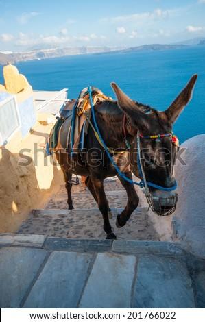 Santorini donkey - stock photo